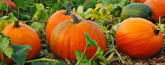 cropped-pumpkin-031.jpg