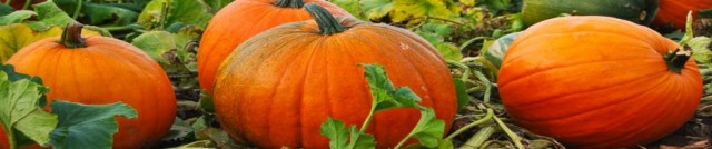 cropped-pumpkin-032.jpg